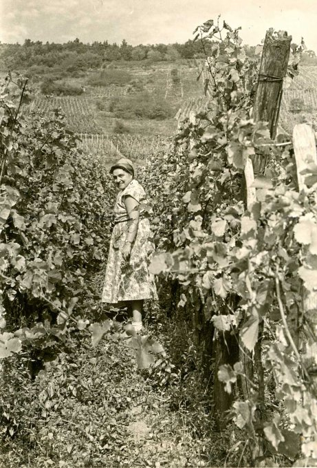 018 - Les vendanges - Madame Becker